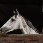 Waarom is het belangrijk om een paardenbox te kopen?