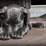 Blaasontsteking hond bestrijden?